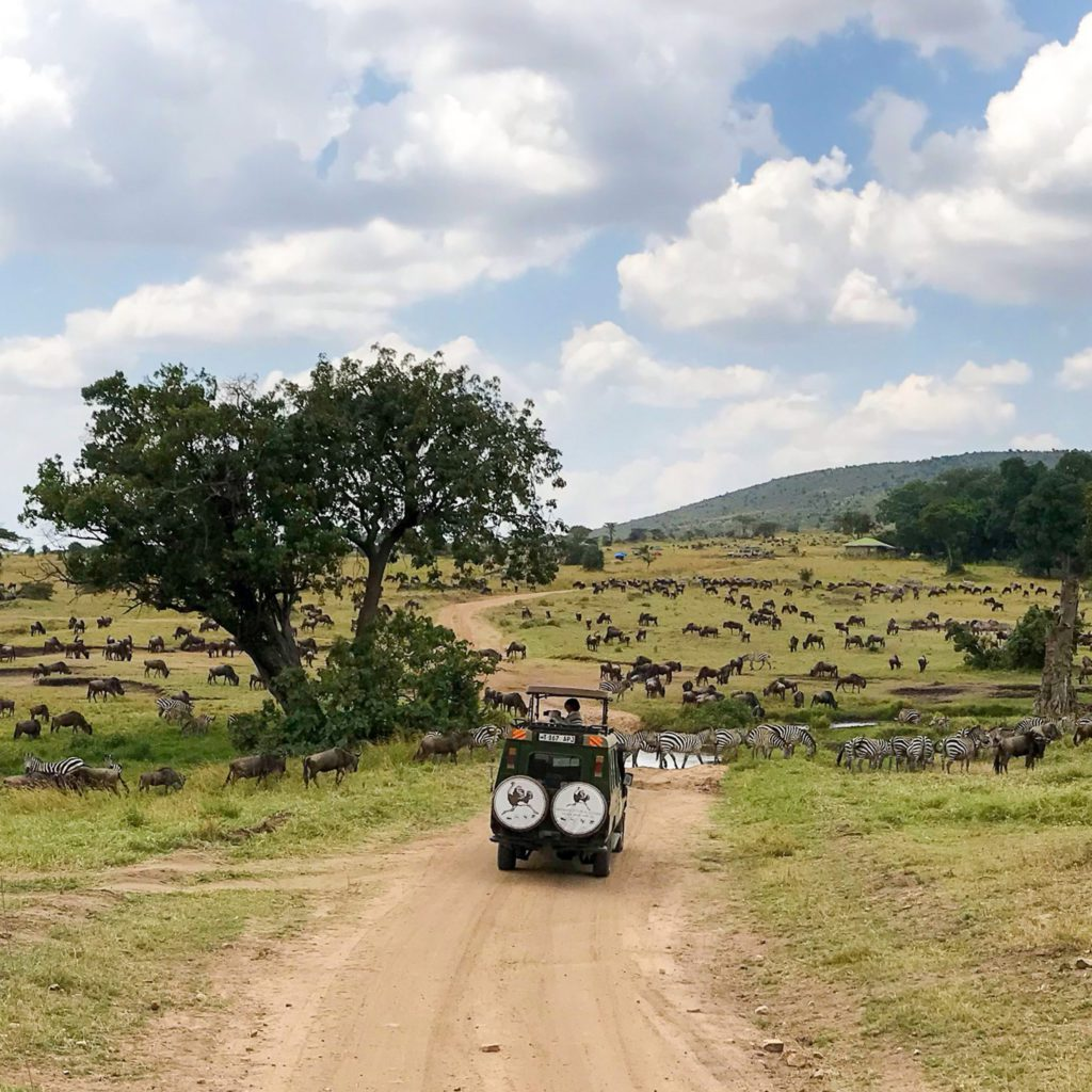 Best time to go to Kenya for Safari